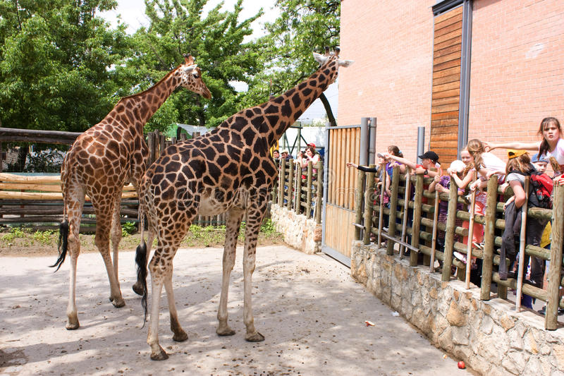 Kinder im Zoo lizenzfreie stockfotografie