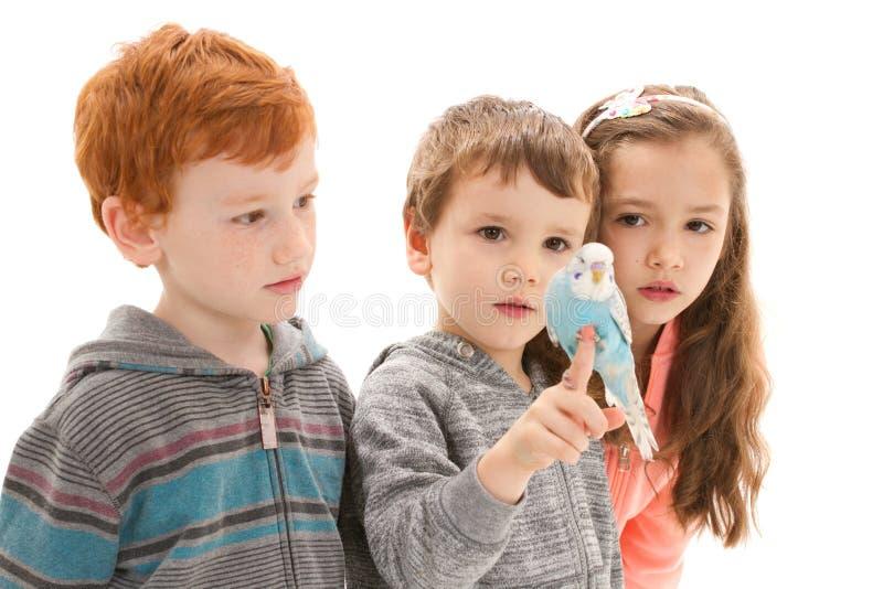 Kinder mit zahmem Haustierwellensittich lizenzfreie stockfotografie