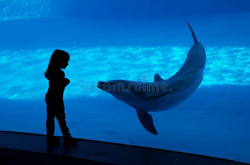 Kinder silhouettieren am Aquarium stockbild