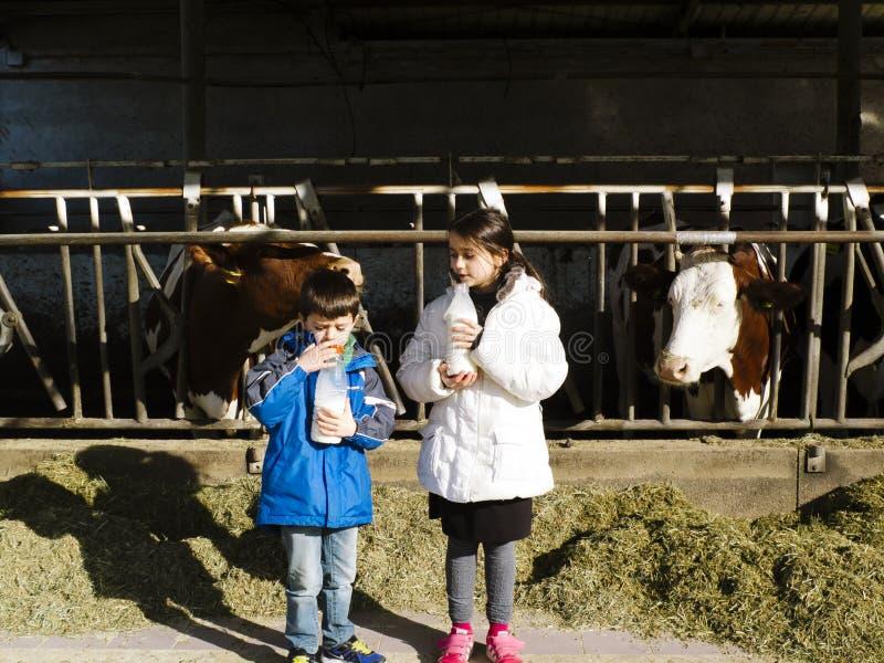 Kinder trinken frische Milch, von den Flaschen auf einem Bauernhof, hinter Th lizenzfreies stockbild