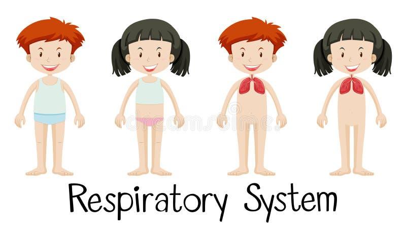 Kinder und Atmungssystem lizenzfreie abbildung