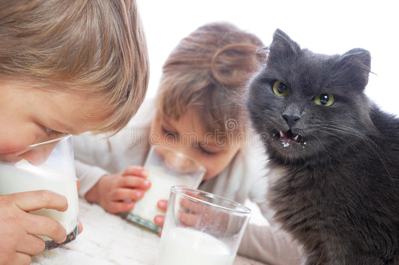 Kinder und Trinkmilch der Katze stockfotografie