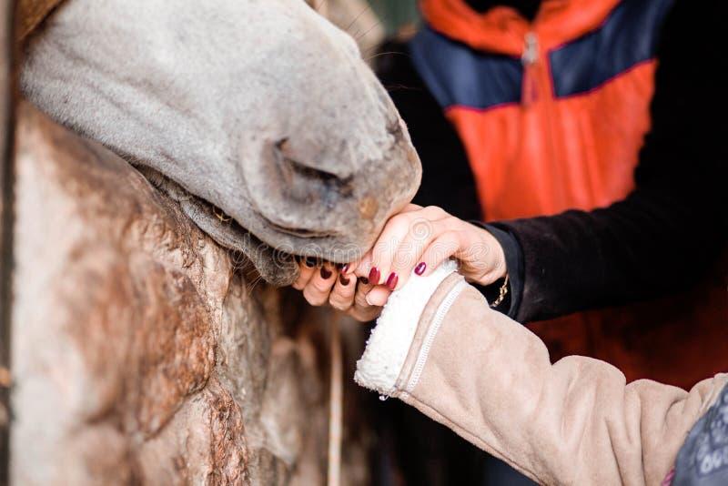 Kinder ziehen das Pferd von den Händen auf dem Bauernhof ein lizenzfreie stockfotografie