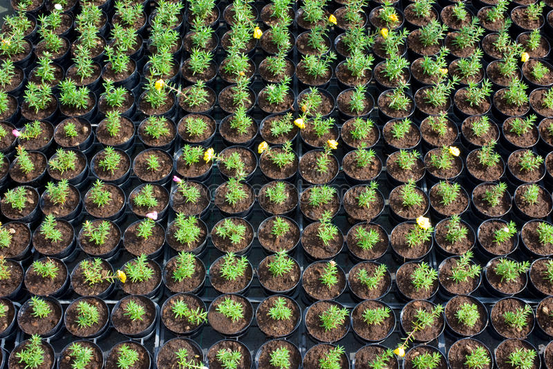 Kinderdagverblijf van bloemen stock foto's