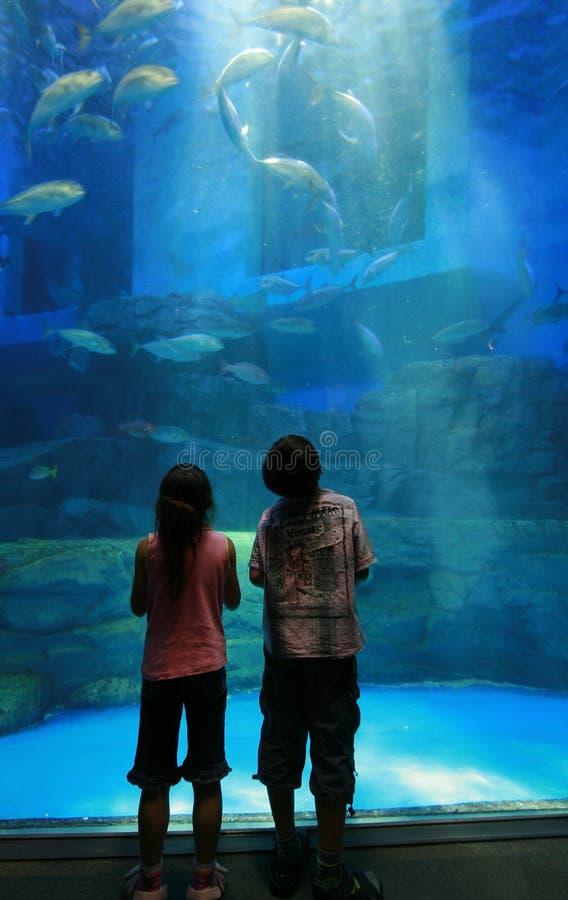 Kinderen in aquarium stock fotografie