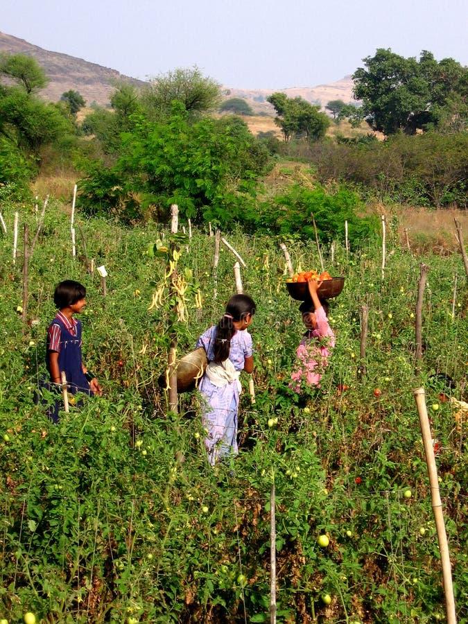 Kinderen bij Landbouwbedrijf stock foto's