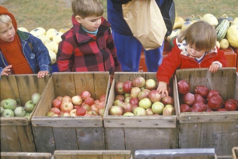 Kinderen die appelen in New England selecteren royalty-vrije stock fotografie