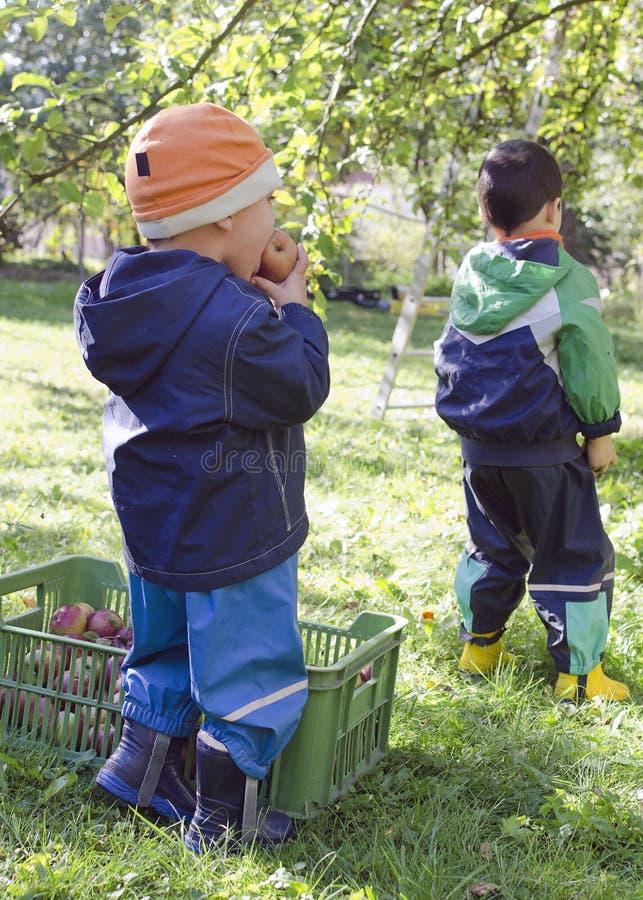 Kinderen die appelen plukken stock fotografie