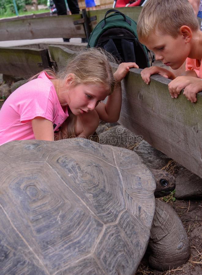 Kinderen die de tortoise aanraken, na 19e jaarlijkse weeggebeurtenis Galápagos Tortoises royalty-vrije stock foto's