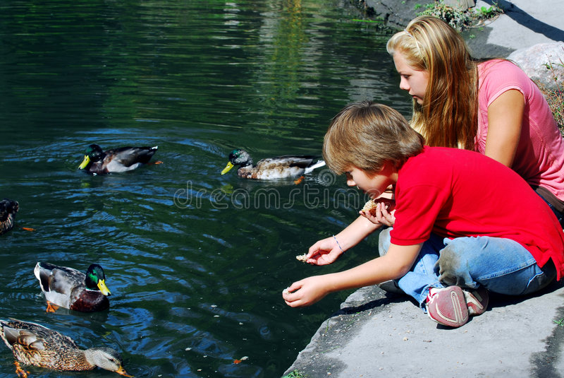 Kinderen die eenden voeden stock afbeeldingen