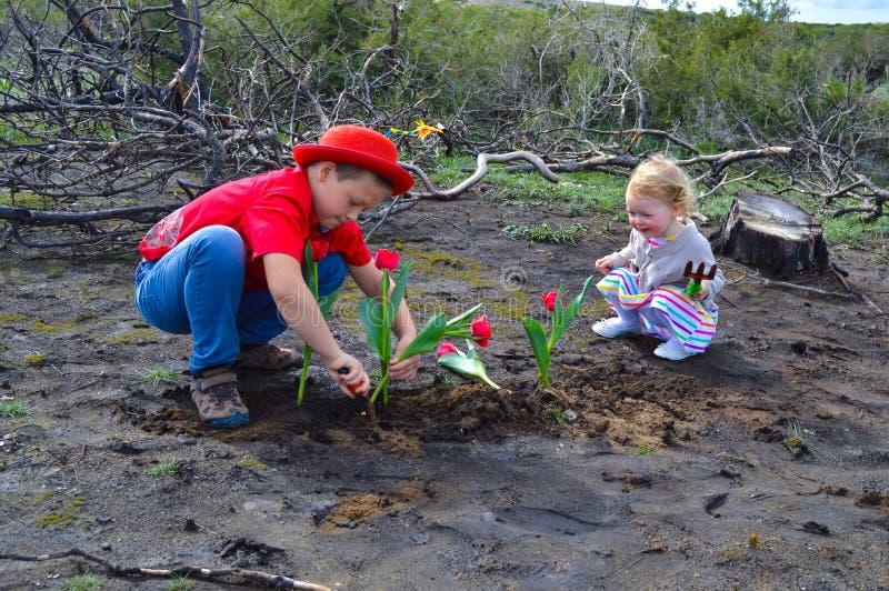 Kinderen die tulpen over gebrande grond planten royalty-vrije stock foto's