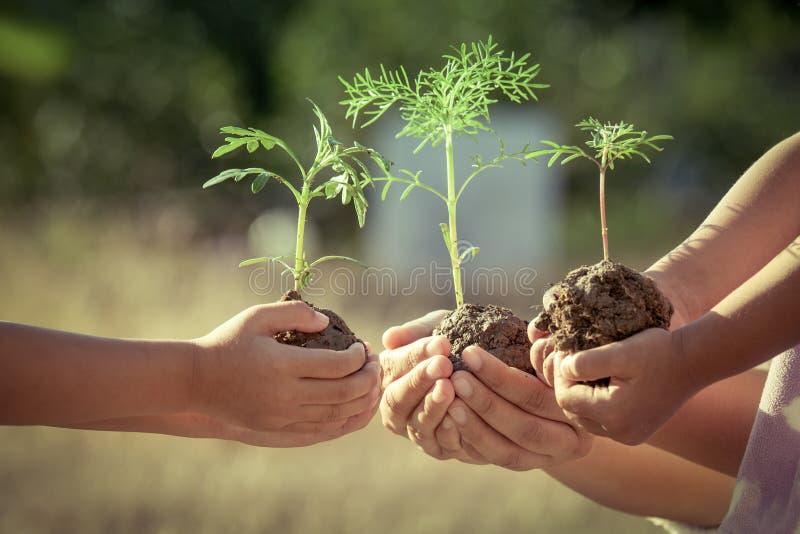 Kinderen en ouderholdingsjonge plant in handen stock afbeelding