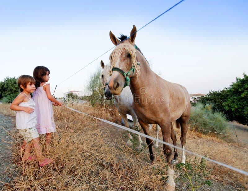Kinderen en paarden stock foto's
