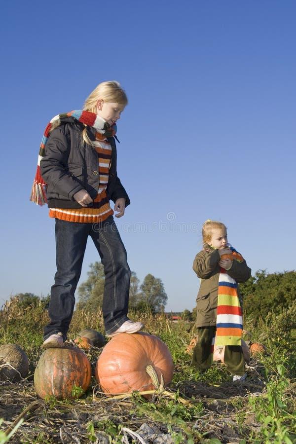 Kinderen op pompoengebied stock fotografie