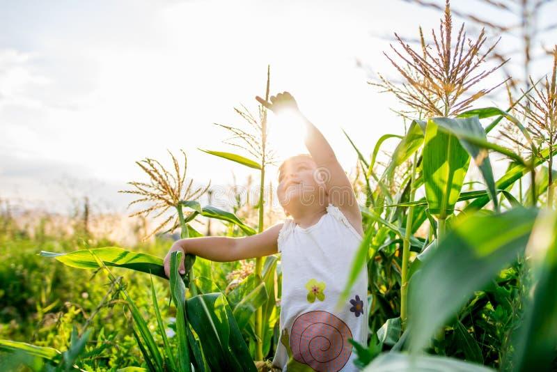 Kinderen` s gang in graan het meisje in het graan avonturen royalty-vrije stock foto