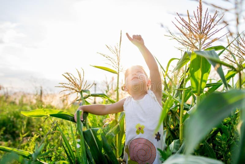 Kinderen` s gang in graan het meisje in het graan avonturen royalty-vrije stock fotografie