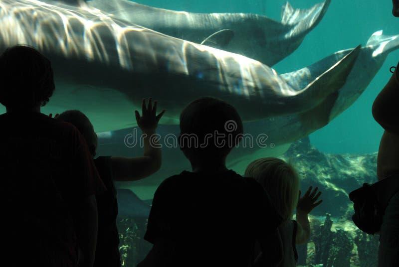 Kinderen in vissenaquarium stock foto's