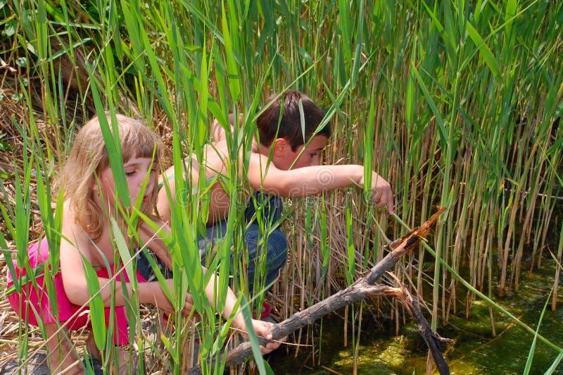 Kinderen in zegge stock foto's