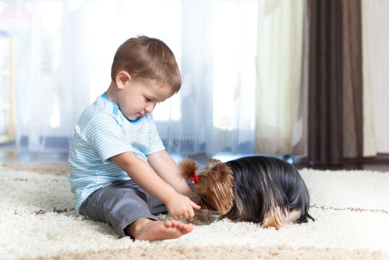 Kinderernährung-Yorkshire-Terrierhund zu Hause lizenzfreie stockbilder