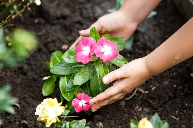 Kinderhände um grüne junge Blumenanlage lizenzfreie stockbilder