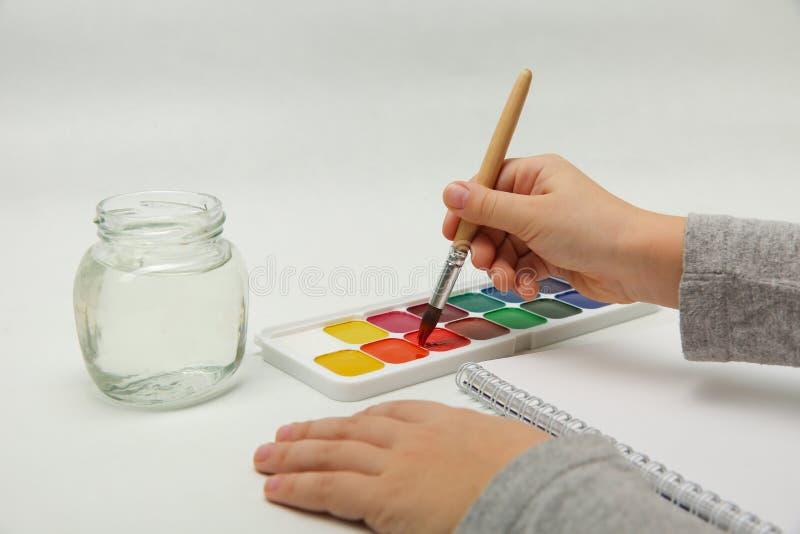 Kinderhand taucht die Bürste in der Aquarellfarbe auf einem weißen Hintergrund ein stockfotos