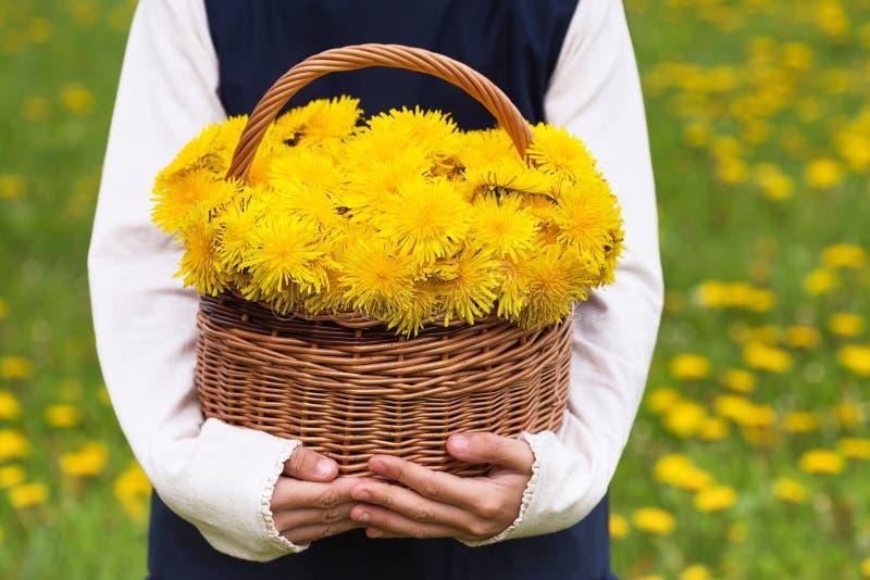 Kinderholdingkorb mit gelben Blumen des Löwenzahns lizenzfreies stockbild