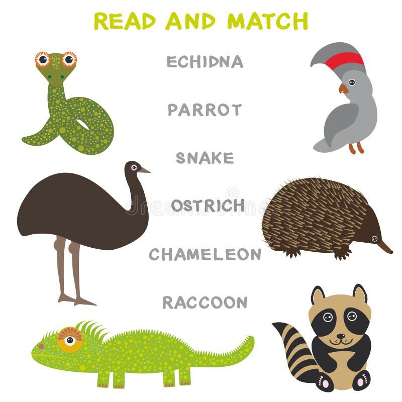 Kinderwörter, die das Spielarbeitsblatt gelesen und Match lernen Lustiges Tierstraußpapageienschlange Echidnawaschbär-Chamäleon L vektor abbildung