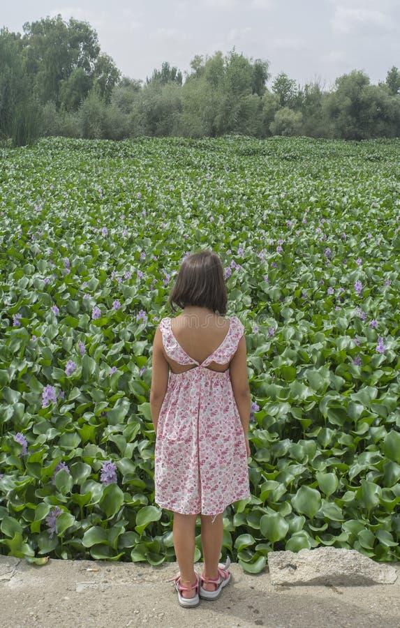 Kindmeisje over de bank van de waterhyacint Invasieve installaties op rivieren c stock foto