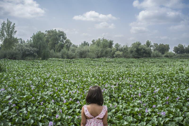 Kindmeisje over de bank van de waterhyacint Invasieve installaties op rivieren c royalty-vrije stock afbeeldingen