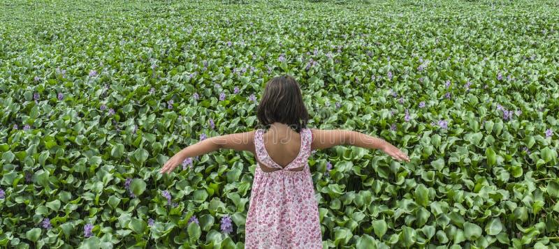 Kindmeisje over de bank van de waterhyacint Invasieve installaties op rivieren c royalty-vrije stock afbeelding