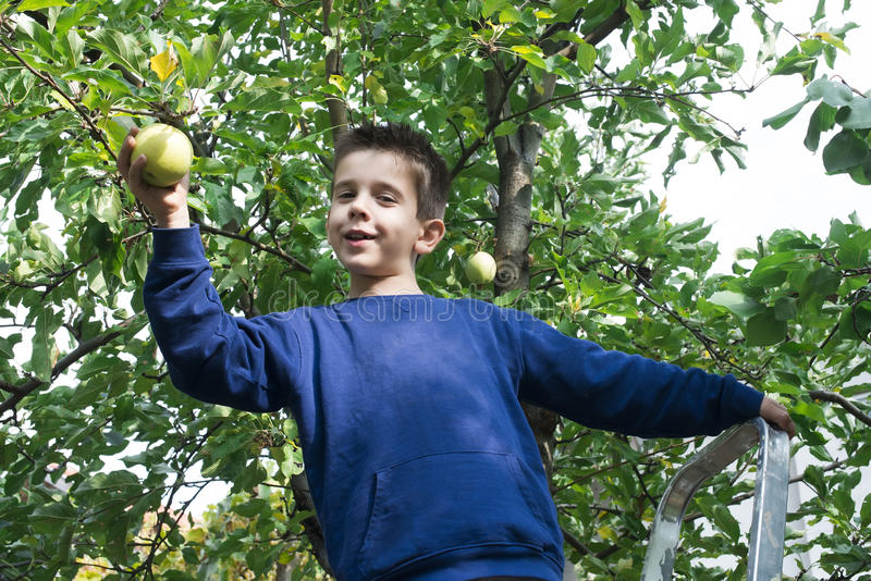 Kindoogst van appel stock fotografie