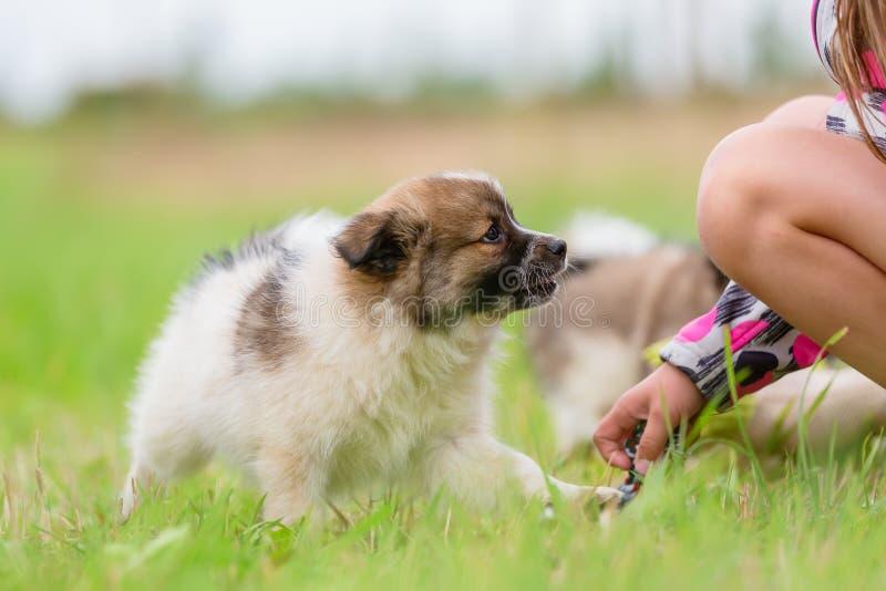 Kindspelen met een Elo-puppy stock afbeelding