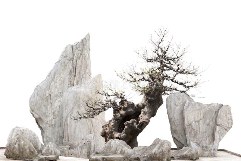 Kines - japansk bonsitree och stenar arkivfoto