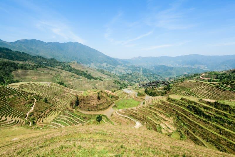 kinesen fields den terrasserade ligganden arkivfoton