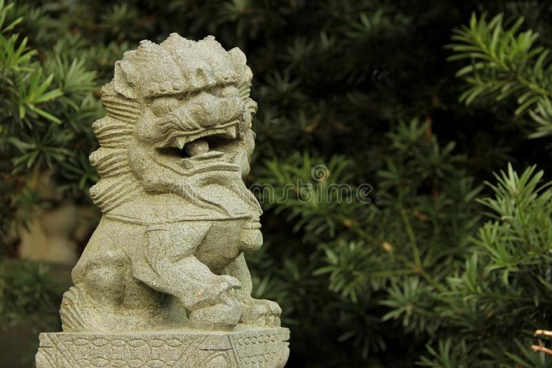 Kinesisk förmyndarelion arkivfoto
