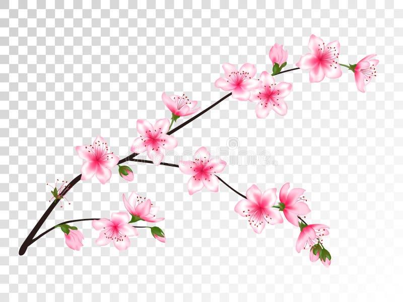 Kinesisk körsbärsröd filial med blommaillustrationen stock illustrationer
