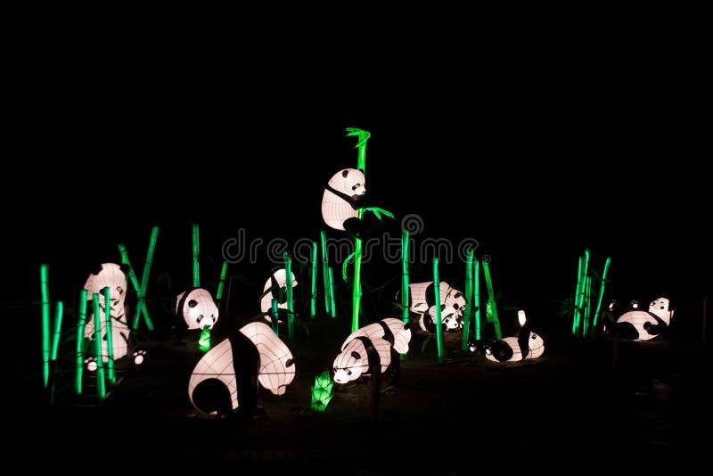 Kinesisk lyktainstallation med pandabjörnar