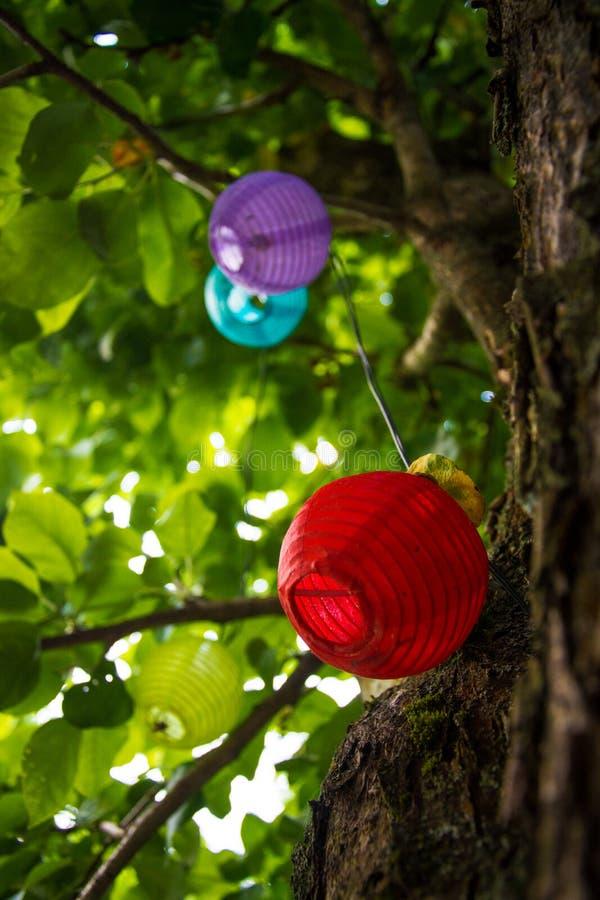 Kinesiska färgrika lyktor som hänger på trädet royaltyfria bilder