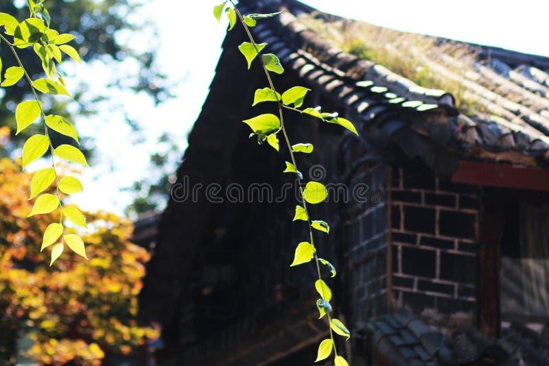 Kinesiska lokal-stil boningshus royaltyfri bild