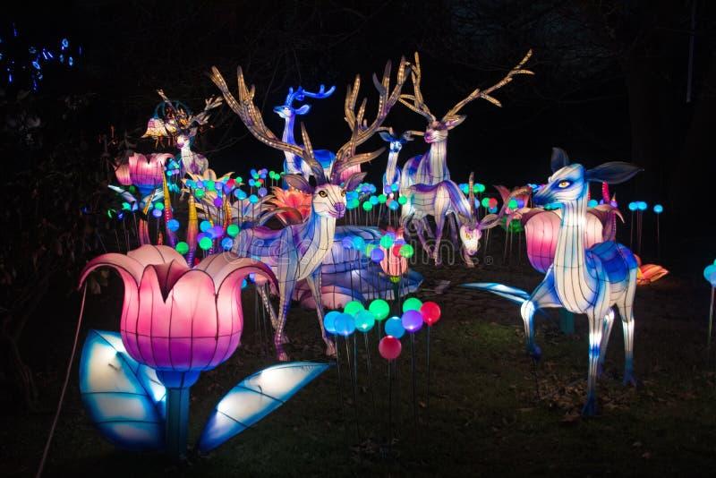 Kinesiska nya år lyktor royaltyfria bilder