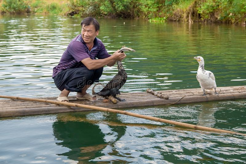 Kinesiskt manfiske med kormoranfåglar i Yangshuo, Guangxi region Kina royaltyfri bild