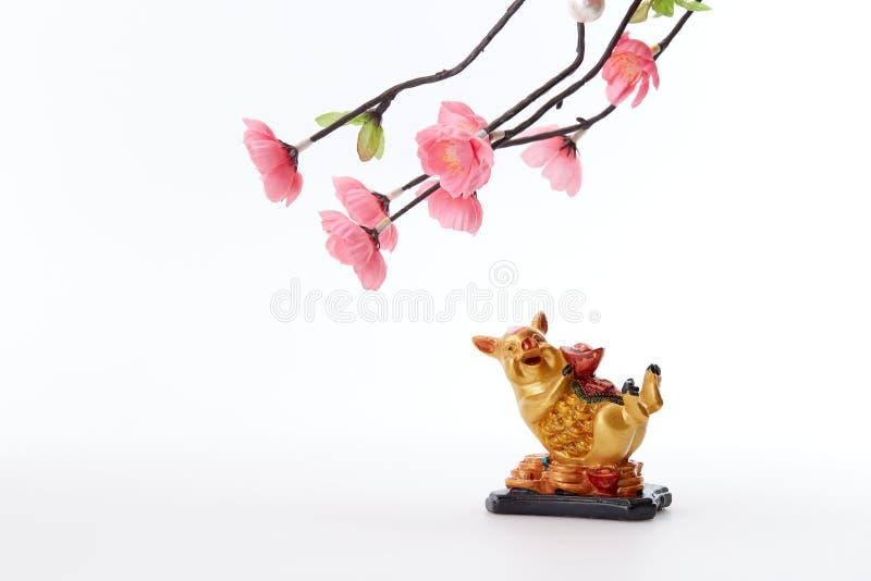Kinesiskt svin 2019 för nytt år med det körsbärsröda trädet arkivfoton