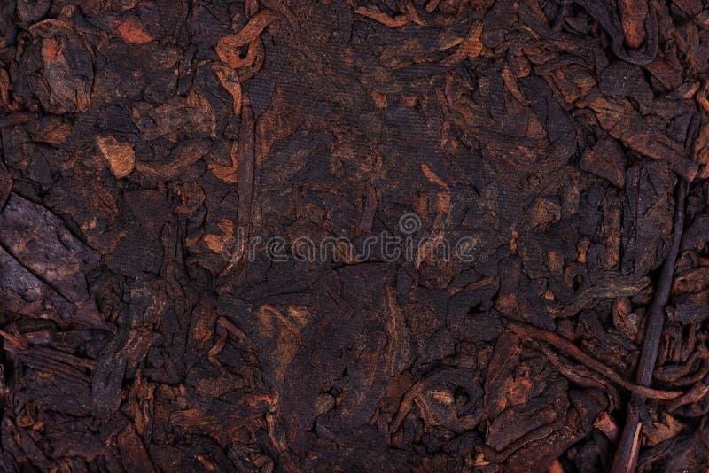 Kinesiskt te Shou Puer Pressande jäst te Pu-erh t?t blommaflugamakro som vilar upp Aromatiskt svart puerte Sund drink textur royaltyfria bilder