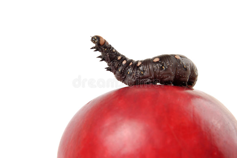 King Of The Apple stock photo