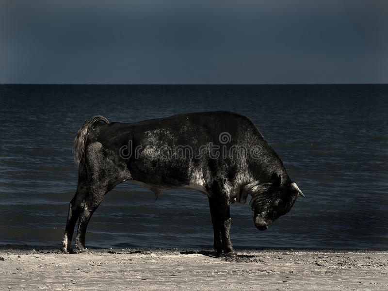 King of the beach stock images