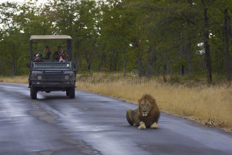 Download King of the Beasts editorial photo. Image of lion, africa - 22563701