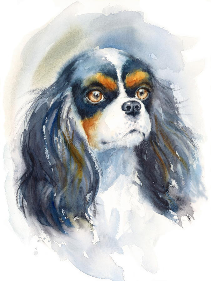 King Charles Spaniel looking up Watercolor Dog Breed Animal Illustration Hand Painted. Hand painted side view Watercolor Portrait of King Charles Spaniel vector illustration