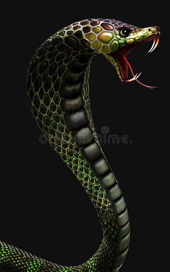 king cobra world s longest venomous snake isolated dark background clipping path d illustration rendering 184120590