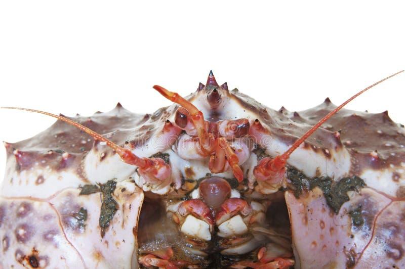 Download King Crab stock photo. Image of kamchatka, shellfish - 19697172