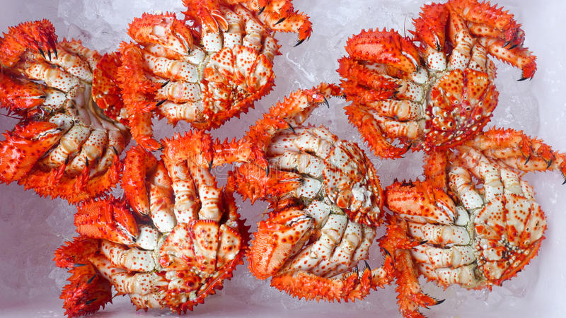 King crabs. In the ice box stock photos